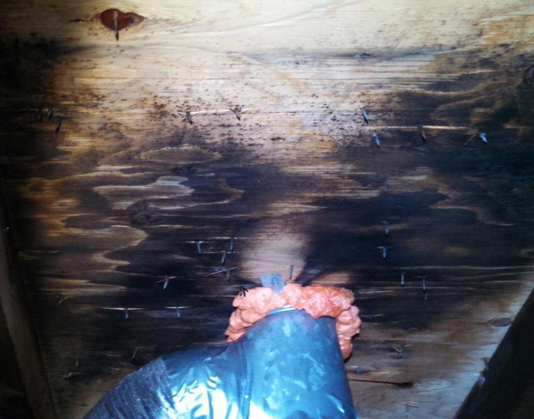 Black Mold removal in Central NJ