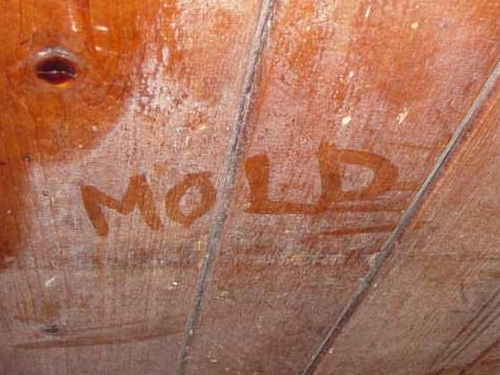 Crawl Space Mold & Rot