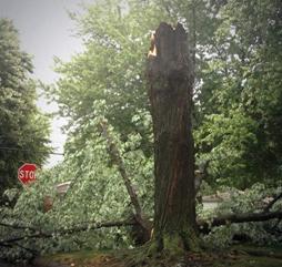 tree damage in michigan