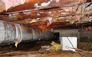 Water has damaged this crawl space and allowed for mold growth