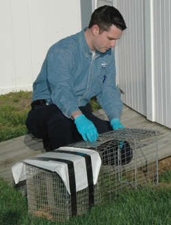 Trap and Remove Wildlife services from Cowleys Pest Services