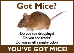 Got Mice? Do you see droppings? Do you see tracks? Do you smell musky odor? You've got mice!