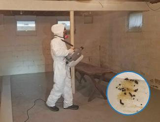 Sanitizing and deodorizing basement