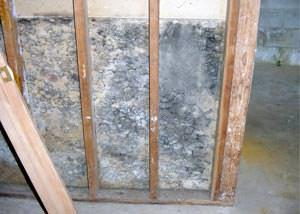 home mold removal
