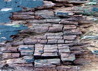Dry rot damaging wood in Durango