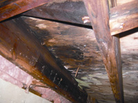 mold, rot, and decay damage in a damp, humid crawl space