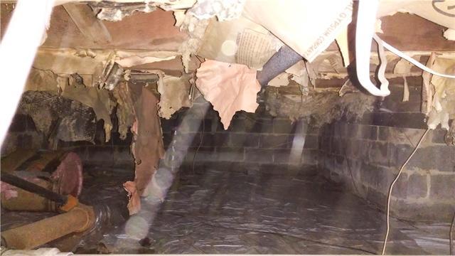 Mold and Moisture Control in Mount Ephraim, NJ