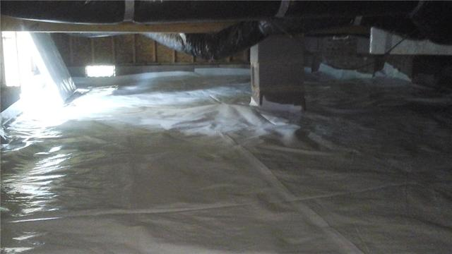 Moisture in this Crawlspace Leads to Plant Growth in Indian Trail, NC