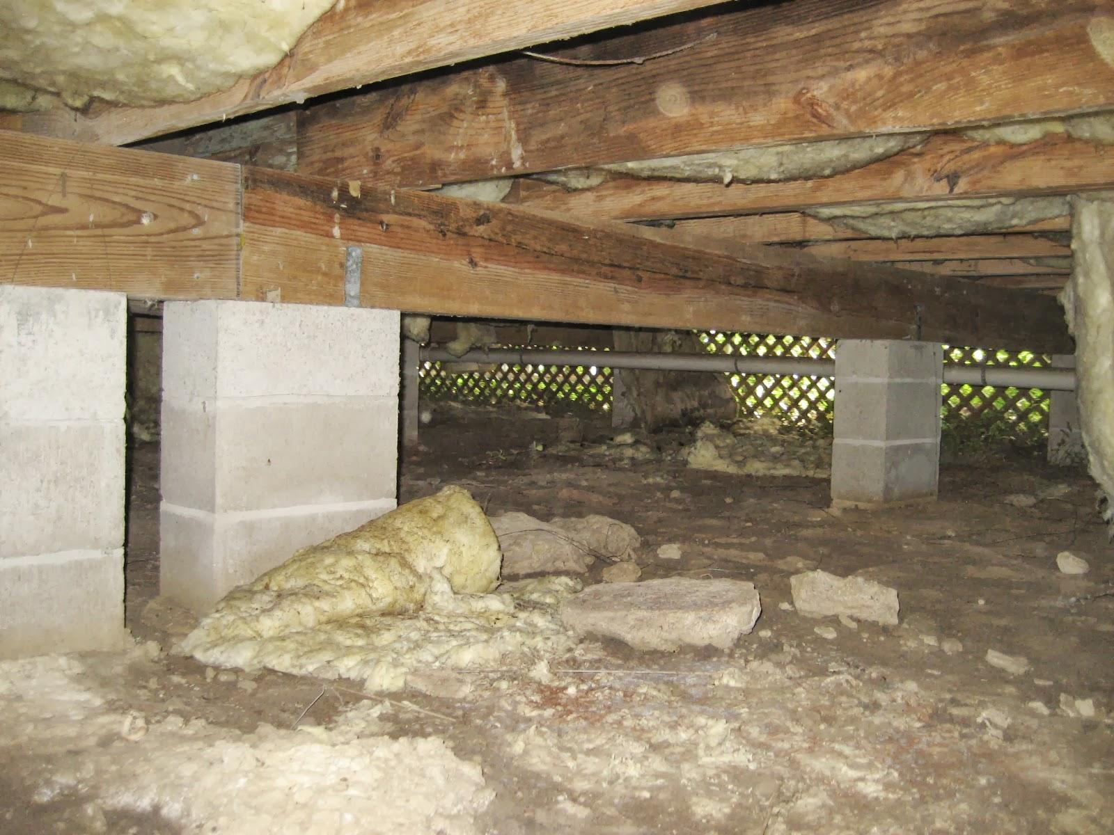 Moldy Crawl Space Repaired in Tallahassee, FL - Before Photo
