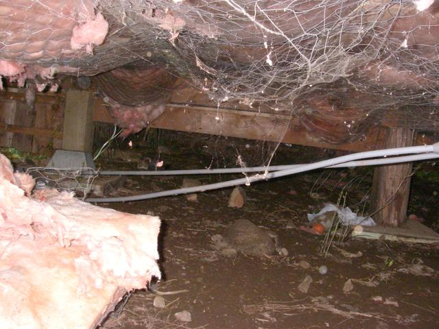 Saltspring Island Crawl Space Encapsulation and Vapor Barrier - Before Photo