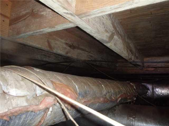 Molding Damp Crawl Space in Sylvania, GA