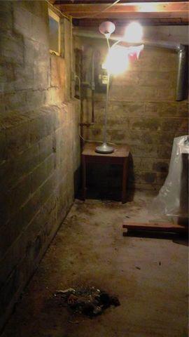Sayreville Wet and Humid Basement Repair