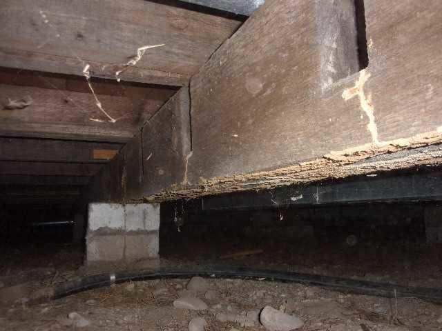 Crawl Space With Moisture, Termite Damage Encapsulated In Grass Lake, MI