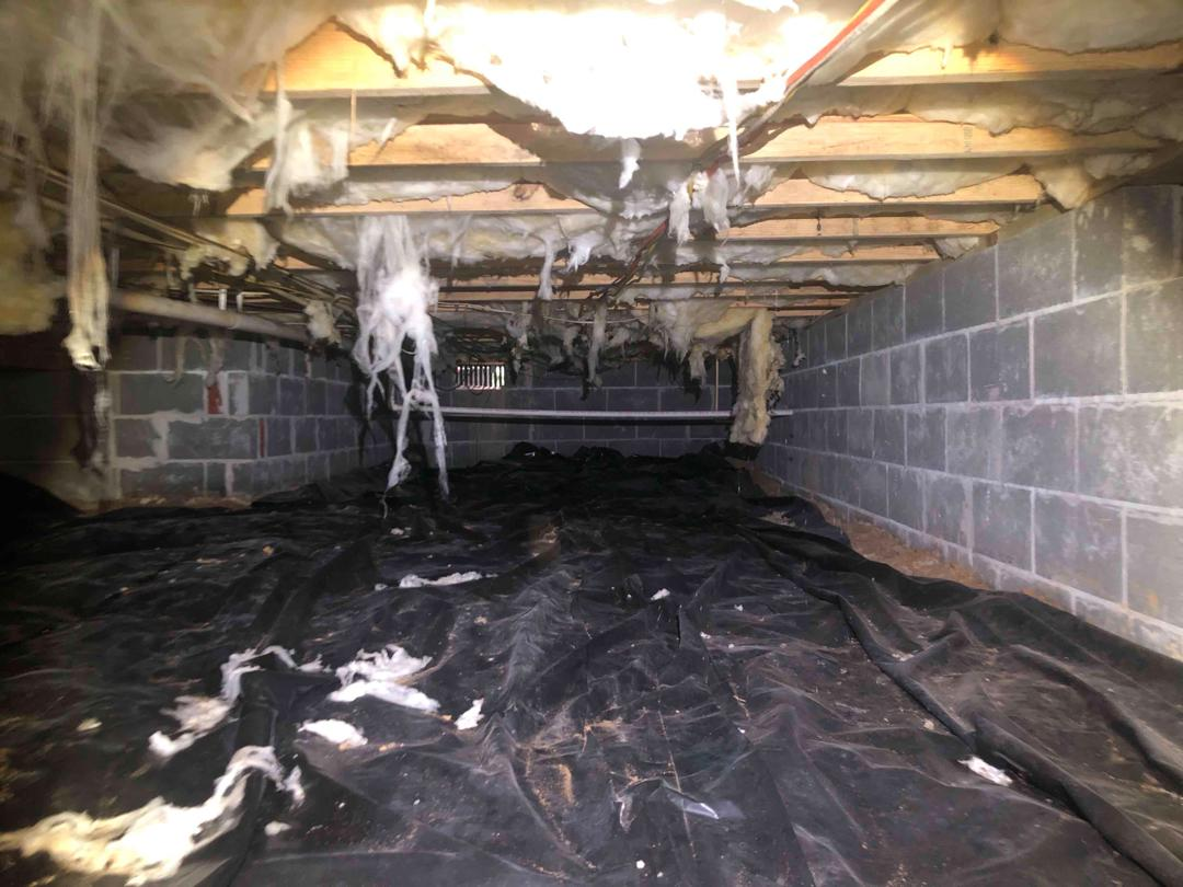 Mold in New Kent, VA Crawl Space - Before Photo