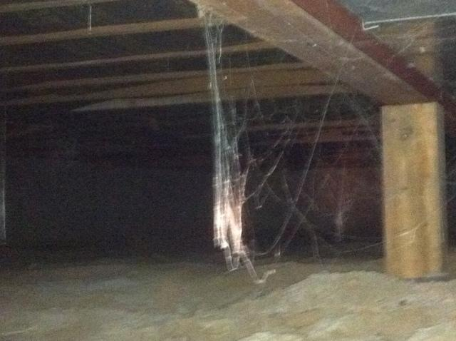 Cobwebs, Mold and Wet Crawl Space in Effingham, IL