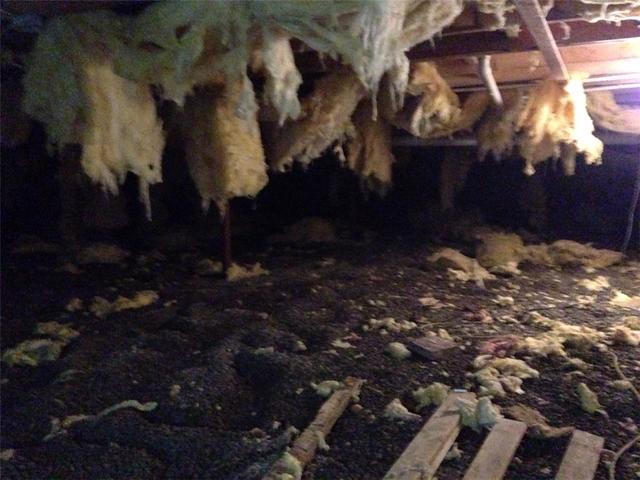 Mold Invades Crawlspace in Nescopeck, PA