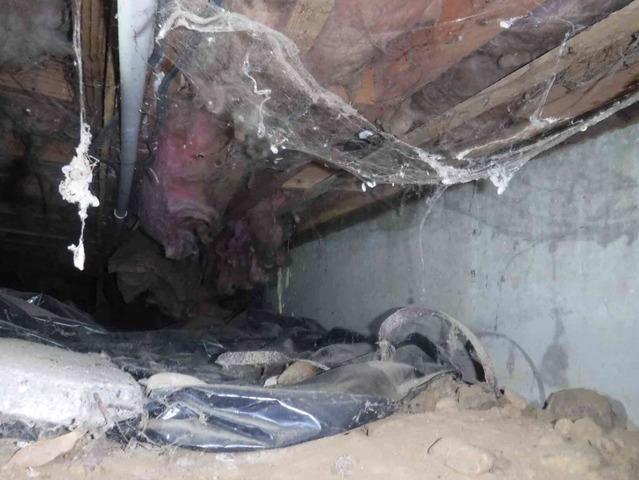 Fixing Mold in Damp Crawl Space, Bellingham, WA