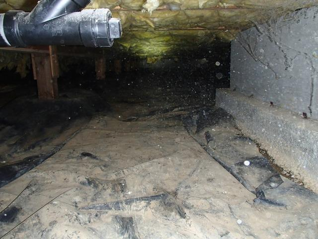 Water and Rodents in Stanwood, WA Crawlspace