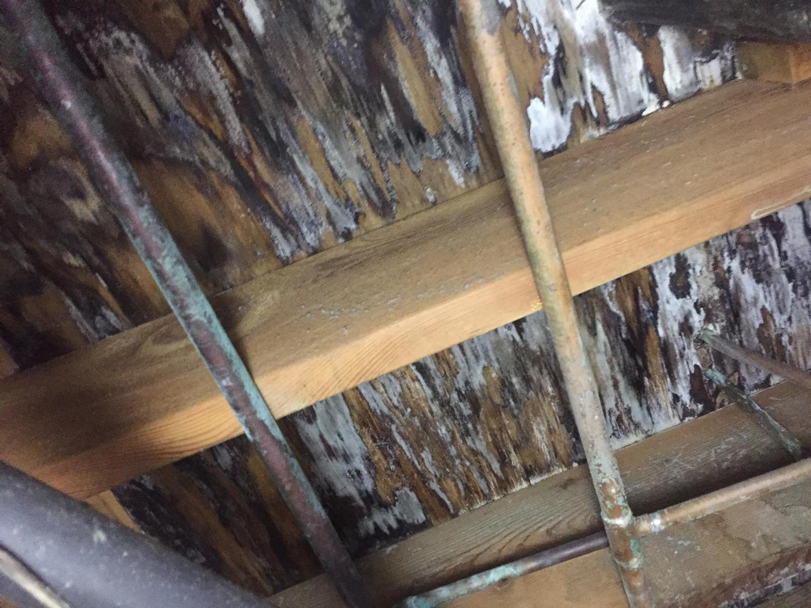 Corydon, KY Mold Problems Solved by Healthy Spaces - Before Photo