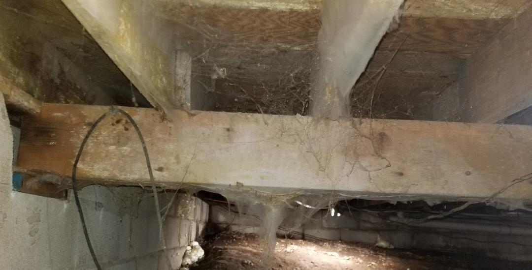 Mold Living in a Cadiz, KY Crawl Space - Before Photo