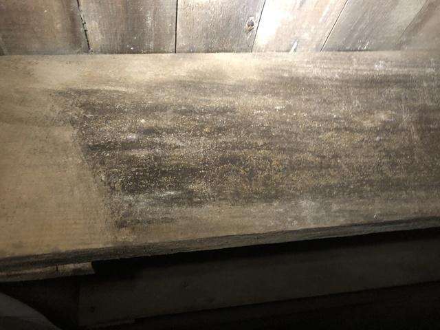Eliminating Mold in Crawl Space in Chrisney, IN