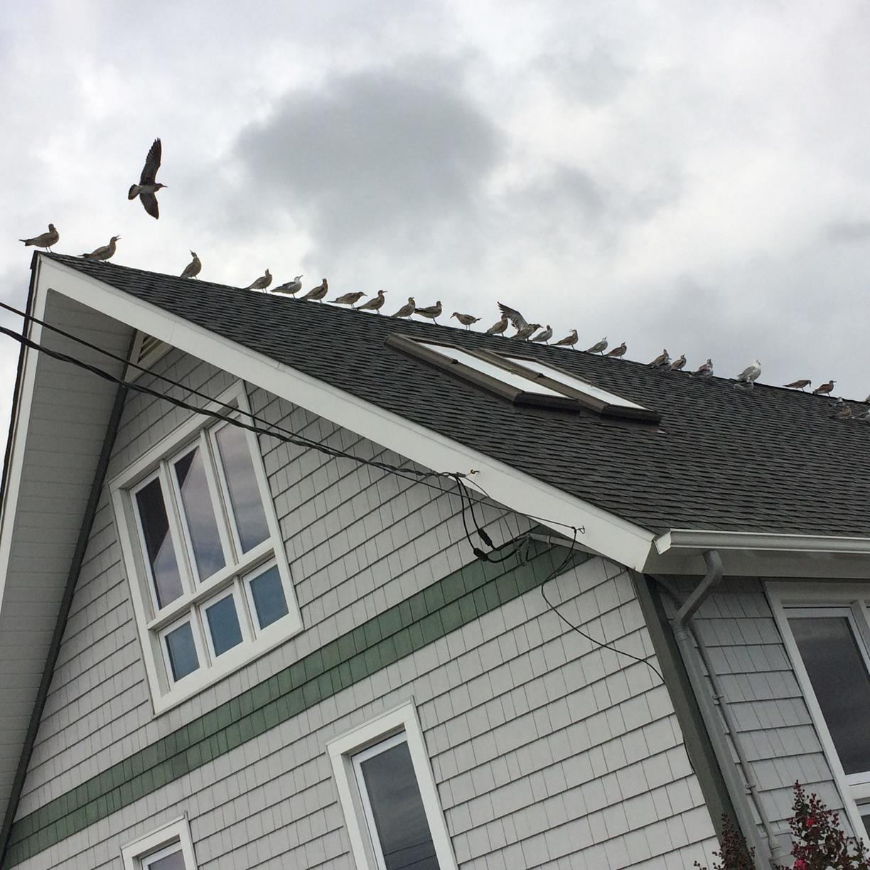 Birds causing havoc - Bird control and removal services in Pine Beach - Before Photo