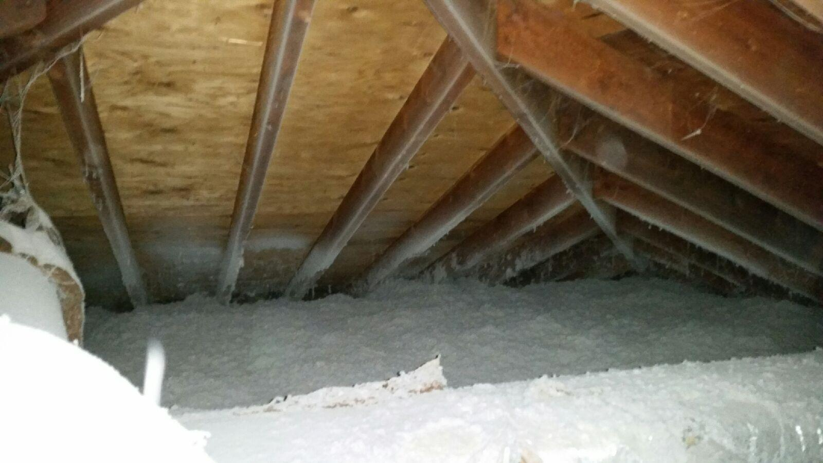 Bat and Racoon Solution with TAP insulation in E. Windsor - After Photo