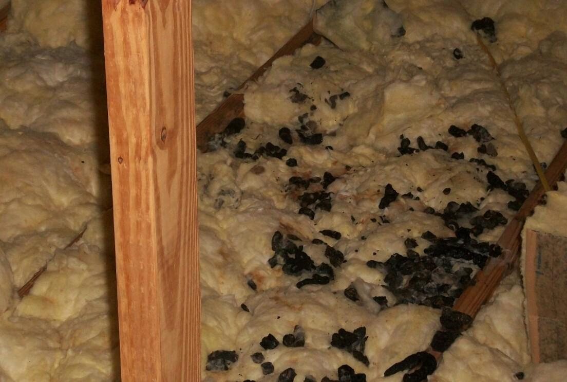Bat and Racoon Solution with TAP insulation in E. Windsor - Before Photo