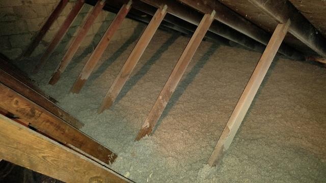 TAP insulation installed after bats make mess in attic - Beachwood bat removal and replacement insulation - After Photo