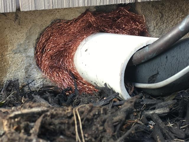 Good detective work finds mice entry point in Dunellen home