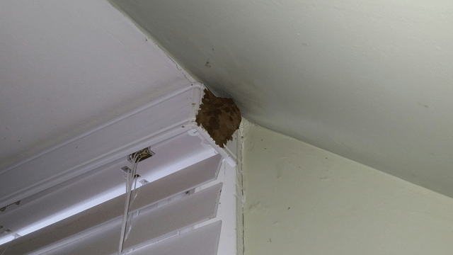 Mud Wasp Infestation in Cliffwood, NJ
