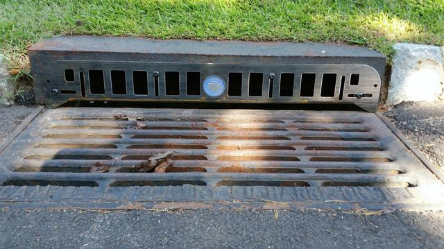 Raccoons going in and out of storm drain in Hopewell, NJ