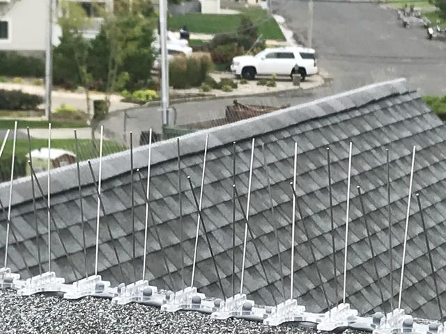 Bird spikes to keep birds away from home in Monmouth Beach, NJ
