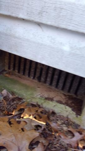 Mice find easy entry into Holmdel crawl space.
