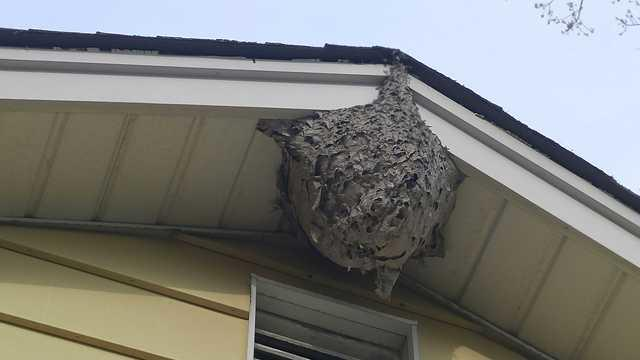 Wasps Frighten Oakhurst, NJ Family