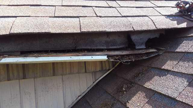 Raccoon Repair Damage in Lincroft, NJ