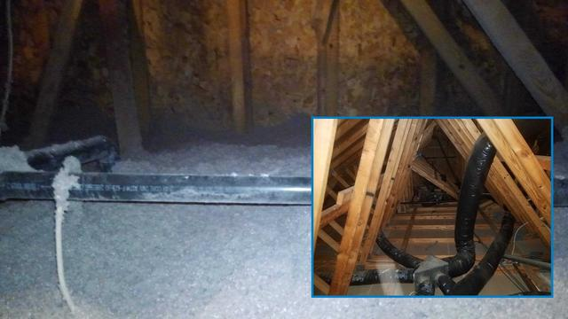 Multiple Wildlife Invasion in Freehold, NJ Attic