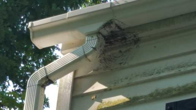 Hornet Infestation in Toms River, NJ