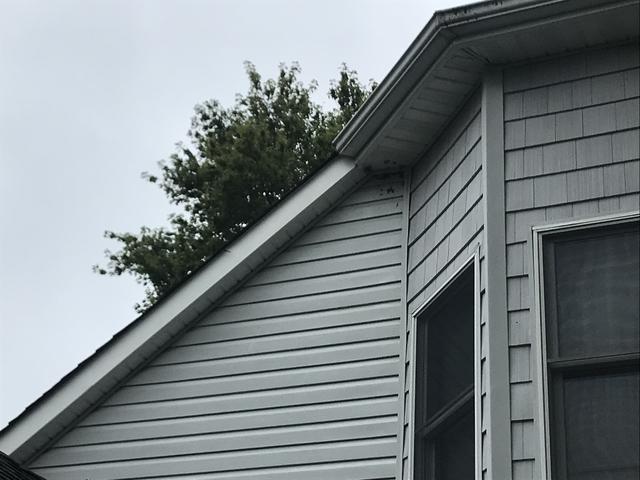 Dangerous hornets nest removed in Spring Lake, NJ