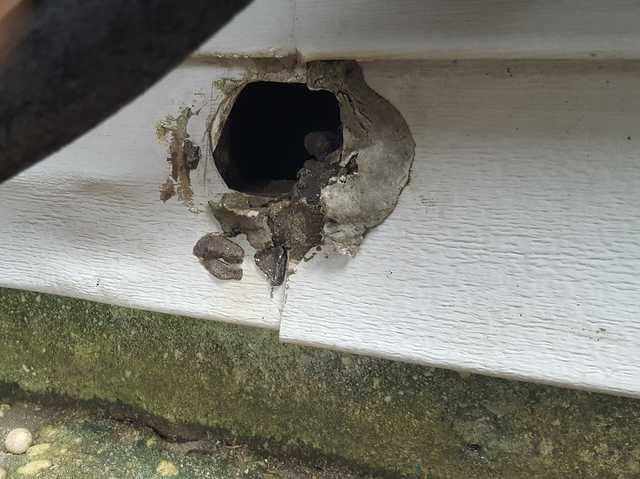 Pest Problem Entry Points in Pt. Pleasant, NJ