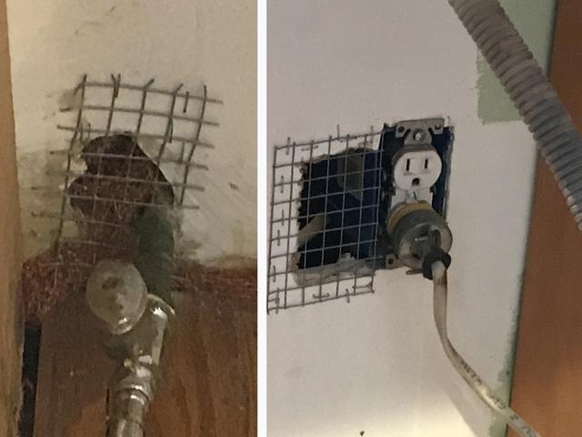 Mouse Problem Solved in Manasquan, NJ Kitchen
