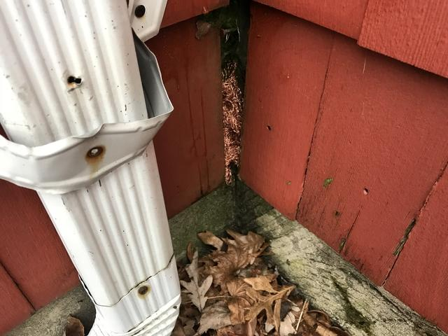Mouse Problem in Freehold, NJ Home