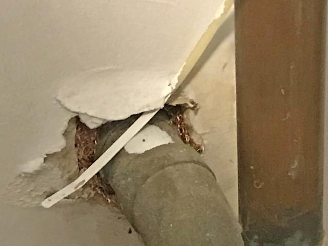 Mice find multiple entry into Rumson utility room.