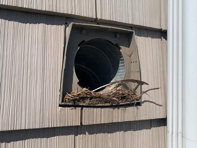 Dryer Vent Full of Birds in Point Pleasant, NJ