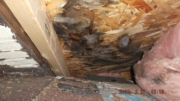 Cornucopia, WI Blown Attic Insulation