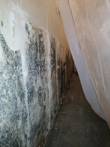 Mold Removal in Retail Building Dallas, TX