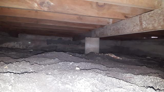 Crawl space remediation in Richardson