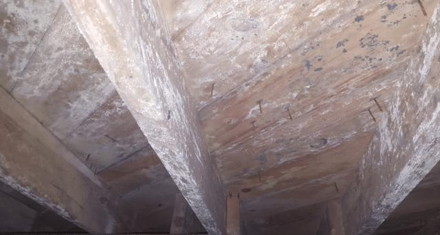 Mold remediation in Dallas