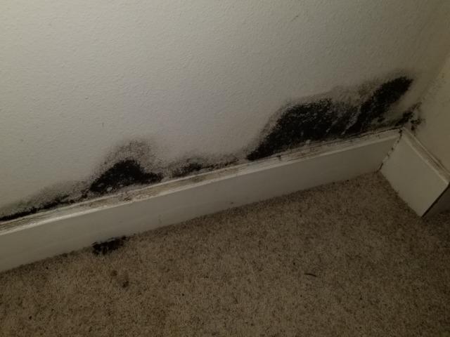 Mold Remediation in Gunter, TX