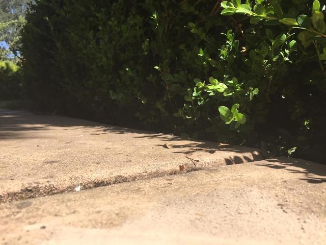 Backyard Patio Lifted with PolyLevel in El Dorado Hills, CA - After Photo